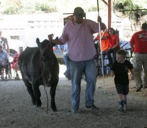 2018 fair beef show